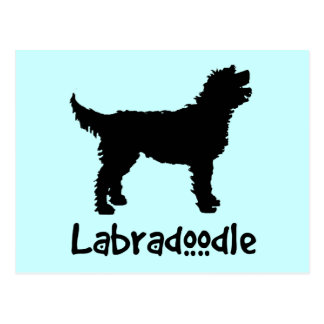 Labradoodle w/ Cool Text (in black) Postcard