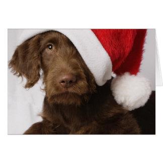 Labradoodle wearing a Santa hat Card