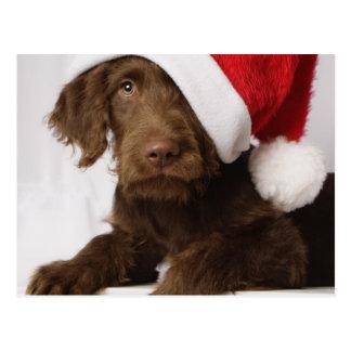 Labradoodle wearing a Santa hat Postcard