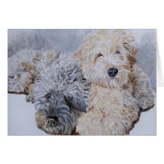 Labradoodles Two Greeting Cards