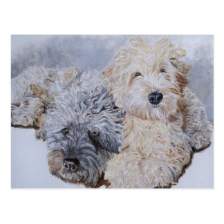 Labradoodles Two Post Cards