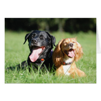 Labrador and Working Cocker Spaniel Greeting Card