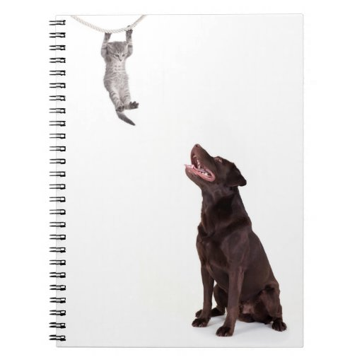 Labrador and young cat note books
