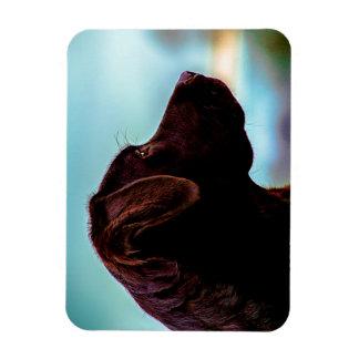 Labrador at Dusk Magnet