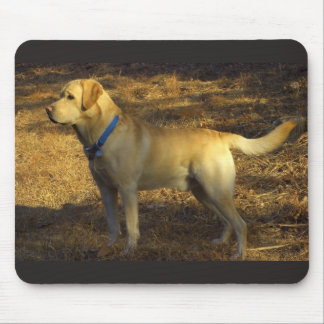Labrador bathing in sunlight mouse pad
