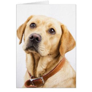 Labrador Card
