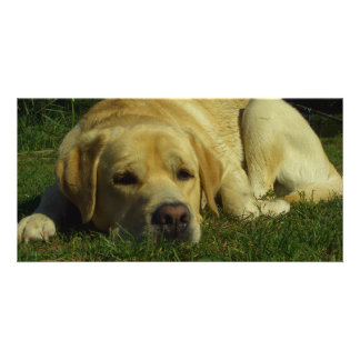 Labrador chilling in the green grass card