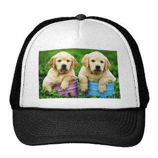 Labrador  dogs puppys  angie trucker hat