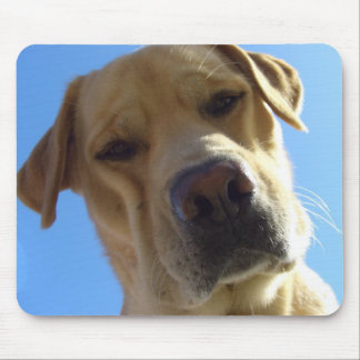 Labrador goofy frontal face portrait mouse pad