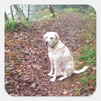 Labrador on Autumn Banks Square Sticker