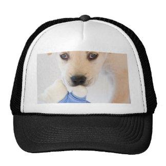 labrador puppy mesh hats