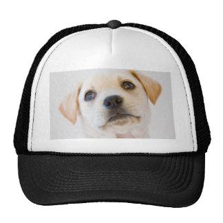 Labrador Puppy Mesh Hat