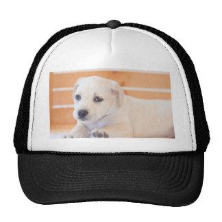 labrador puppy hats