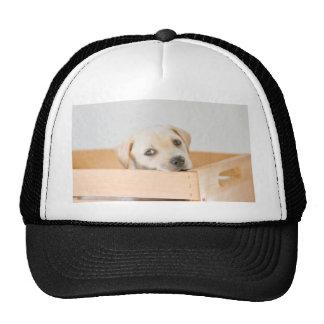 Labrador Puppy Trucker Hat