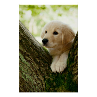 Labrador Puppy Sitting In A Woodland Setting Poster