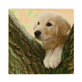 Labrador Puppy Sitting In A Woodland Setting Wood Coaster