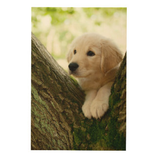 Labrador Puppy Sitting In A Woodland Setting Wood Print