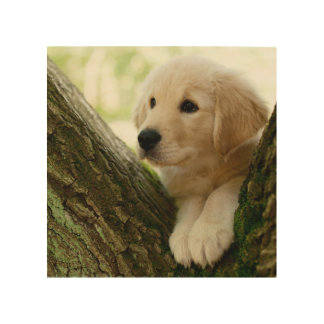 Labrador Puppy Sitting In A Woodland Setting Wood Wall Art