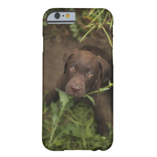 Labrador puppy sitting in grass barely there iPhone 6 case