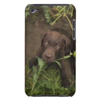 Labrador puppy sitting in grass iPod touch cases