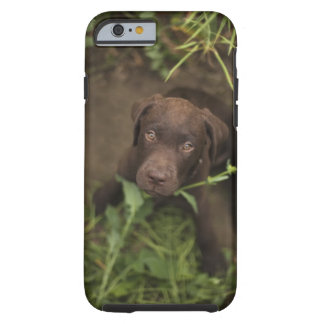 Labrador puppy sitting in grass tough iPhone 6 case