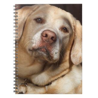 Labrador Retriever 2 Notebook