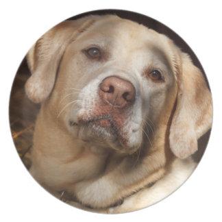Labrador Retriever 2 Plate