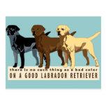 Labrador Retriever 3 colours Postcard