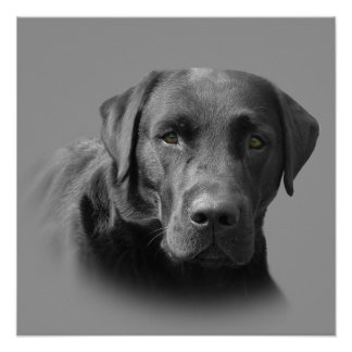 Labrador Retriever Awesome Print