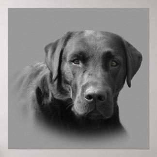 Labrador Retriever Awesome Print