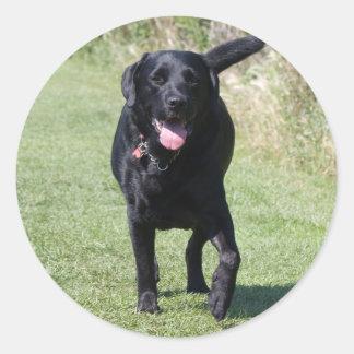 Labrador Retriever black dog, beautiful photo Round Sticker