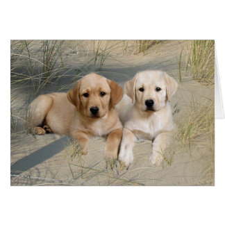 Labrador Retriever Card Pups On Beach