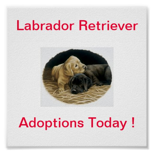 Labrador Retriever Dog Adoption Today Signs Posters
