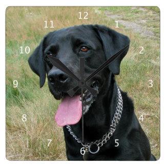 Labrador Retriever dog black beautiful photo Wallclocks