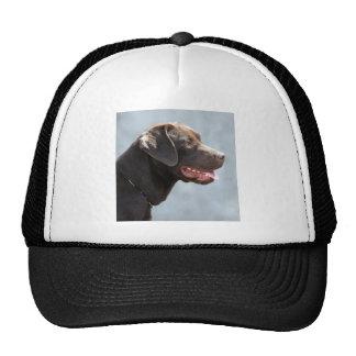 Labrador Retriever Dog Cap