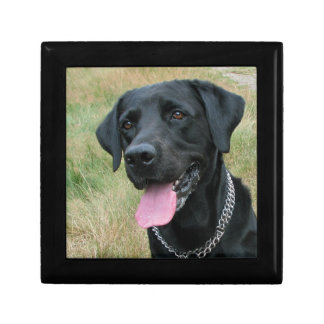 Labrador Retriever dog jewelry box,  trinket box