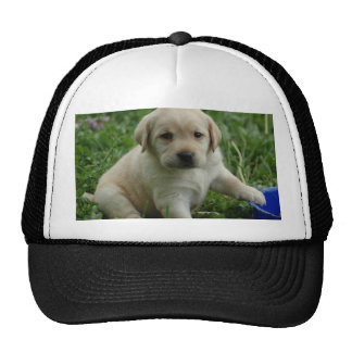 Labrador Retriever Trucker Hats