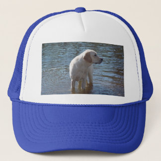 Labrador Retriever Hat At The Lake