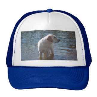 Labrador Retriever Hat At The Lake