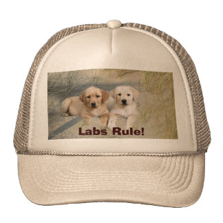 Labrador Retriever Hat Pups On Beach