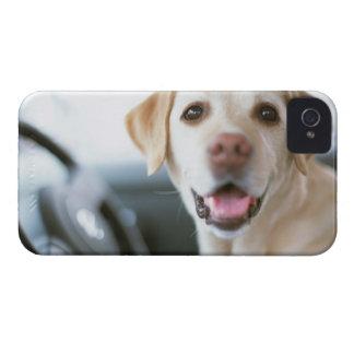 Labrador Retriever iPhone 4 Case-Mate Cases