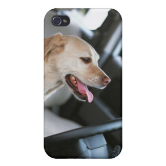 Labrador retriever iPhone 4 cover