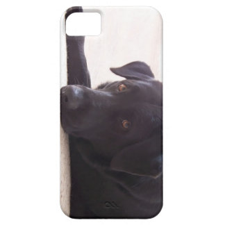 labrador retriever iPhone 5 cases