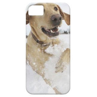 Labrador retriever jumping through deep snow barely there iPhone 5 case