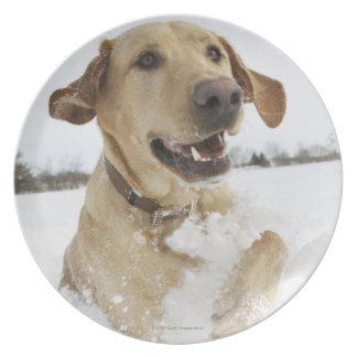 Labrador retriever jumping through deep snow plate