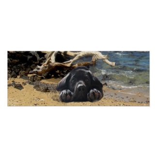 Labrador Retriever Poster Beach