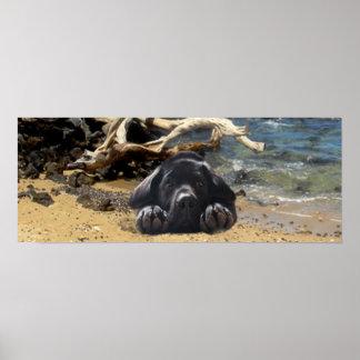 Labrador Retriever Poster Beach