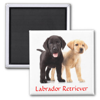 Labrador Retriever Puppies Fridge Magnet