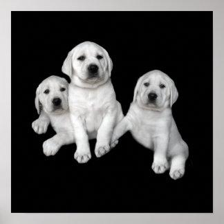 Labrador Retriever Puppies Print