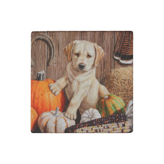 Labrador Retriever Puppy and Pumpkins Stone Magnet